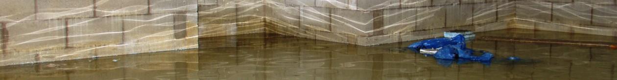 Basement Waterproofing Expert